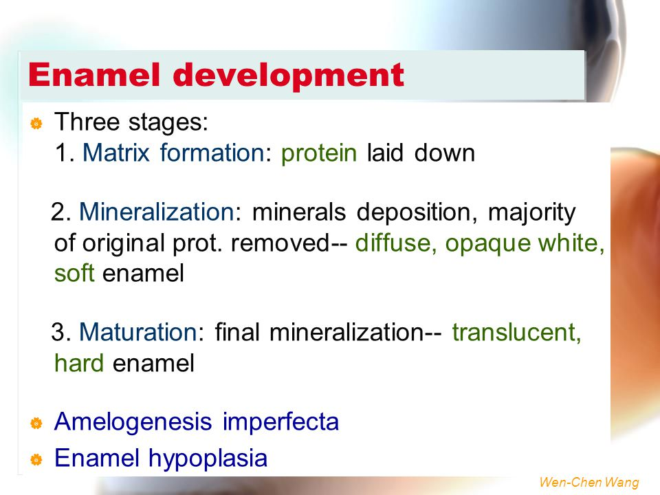 Enamel development Three stages: 1. Matrix formation: protein laid down.