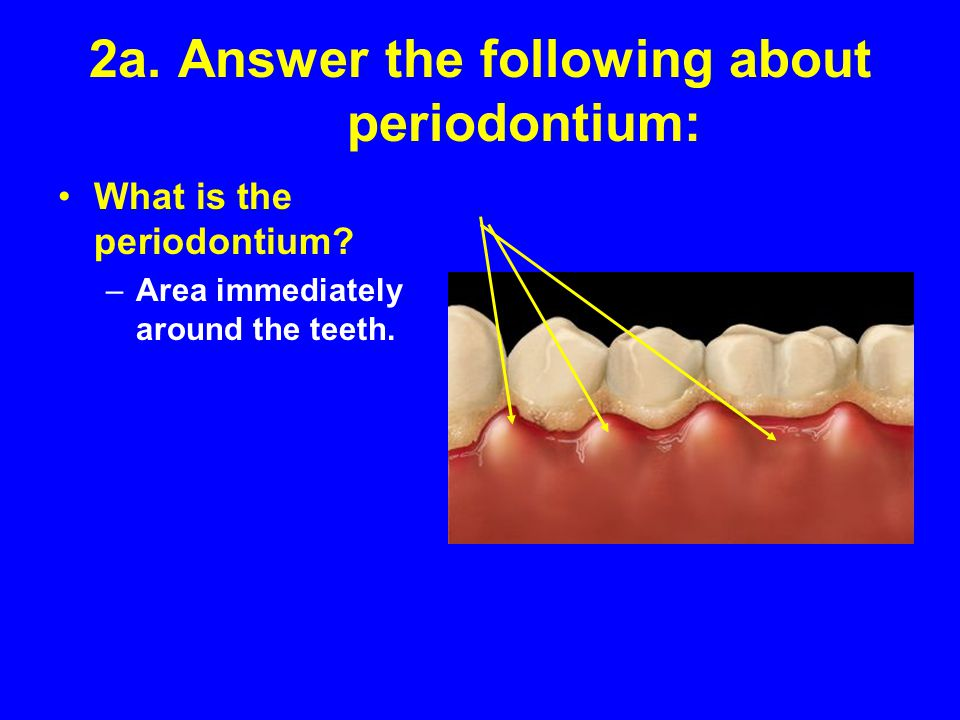 2a. Answer the following about periodontium:
