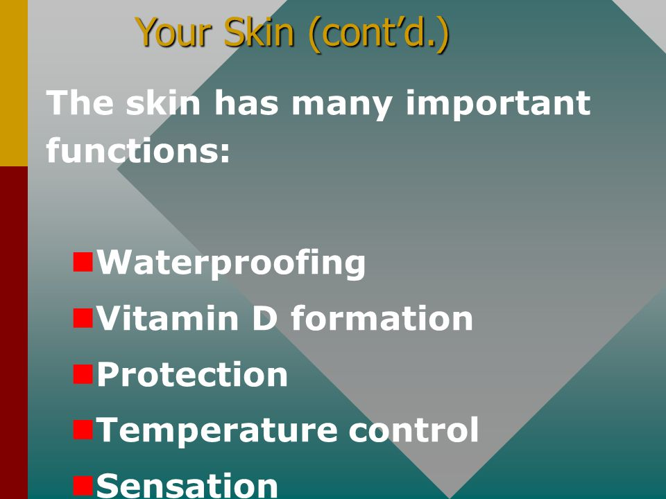 Your Skin (cont'd.) The skin has many important functions: