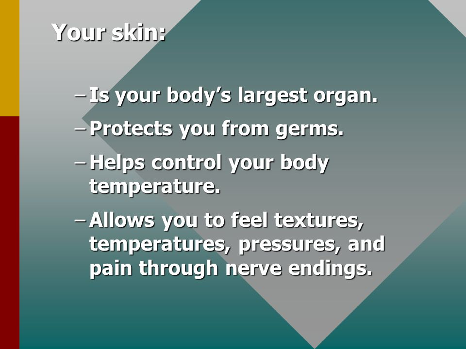 Your skin: Is your body's largest organ. Protects you from germs.