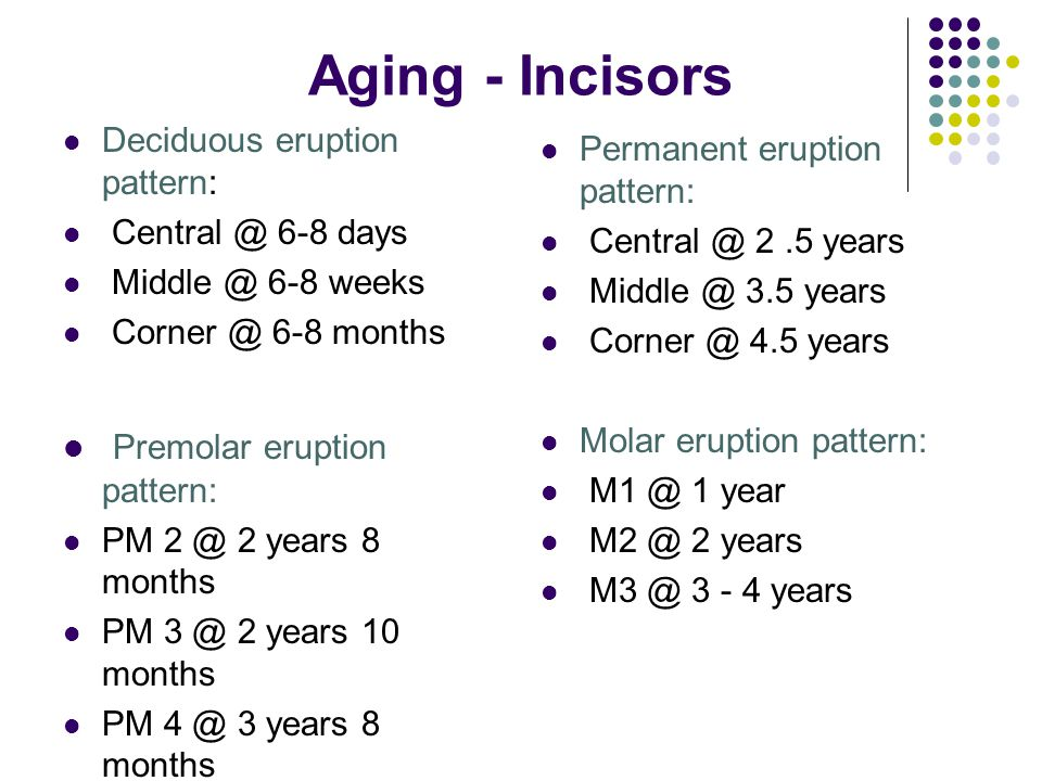 Aging - Incisors Premolar eruption pattern: