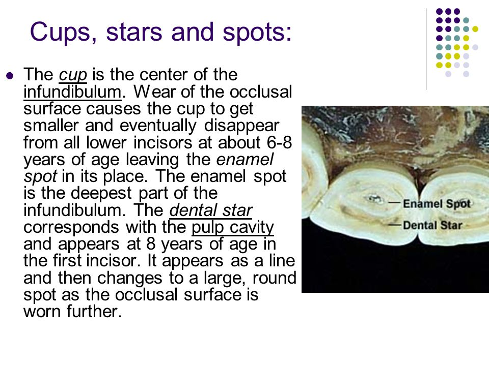 Cups, stars and spots:
