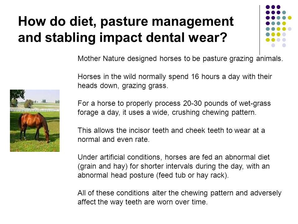How do diet, pasture management and stabling impact dental wear