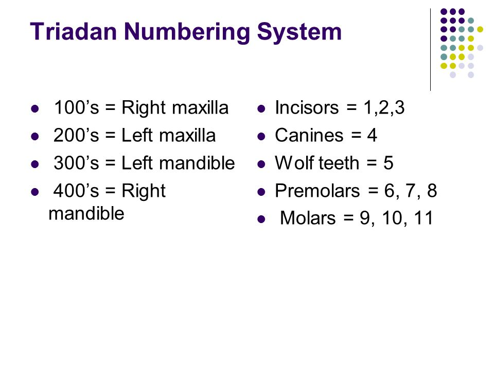 Triadan Numbering System