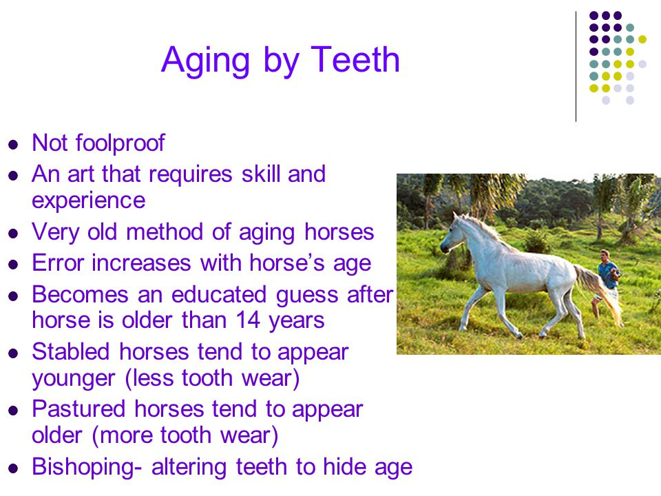 Aging by Teeth Not foolproof An art that requires skill and experience