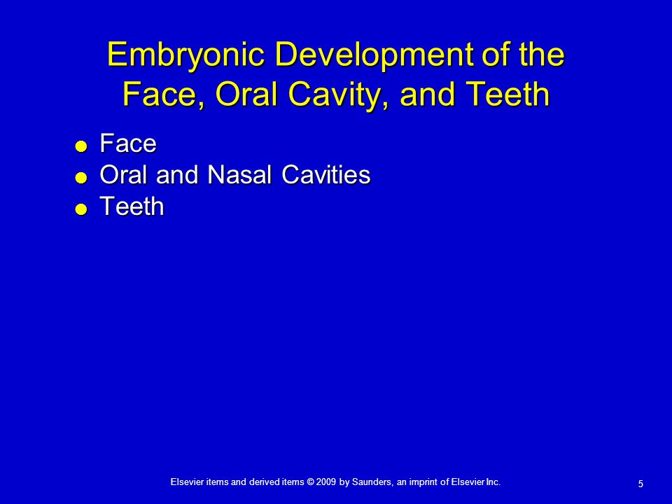 Embryonic Development of the Face, Oral Cavity, and Teeth