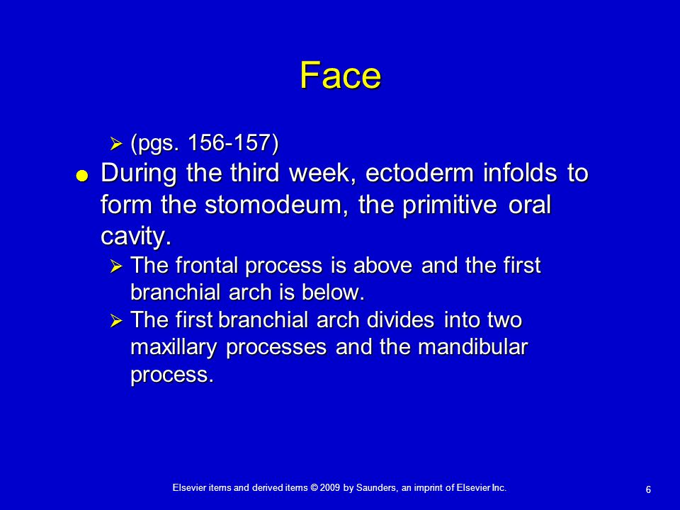 Face (pgs. 156-157) During the third week, ectoderm infolds to form the stomodeum, the primitive oral cavity.