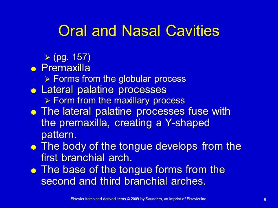 Oral and Nasal Cavities