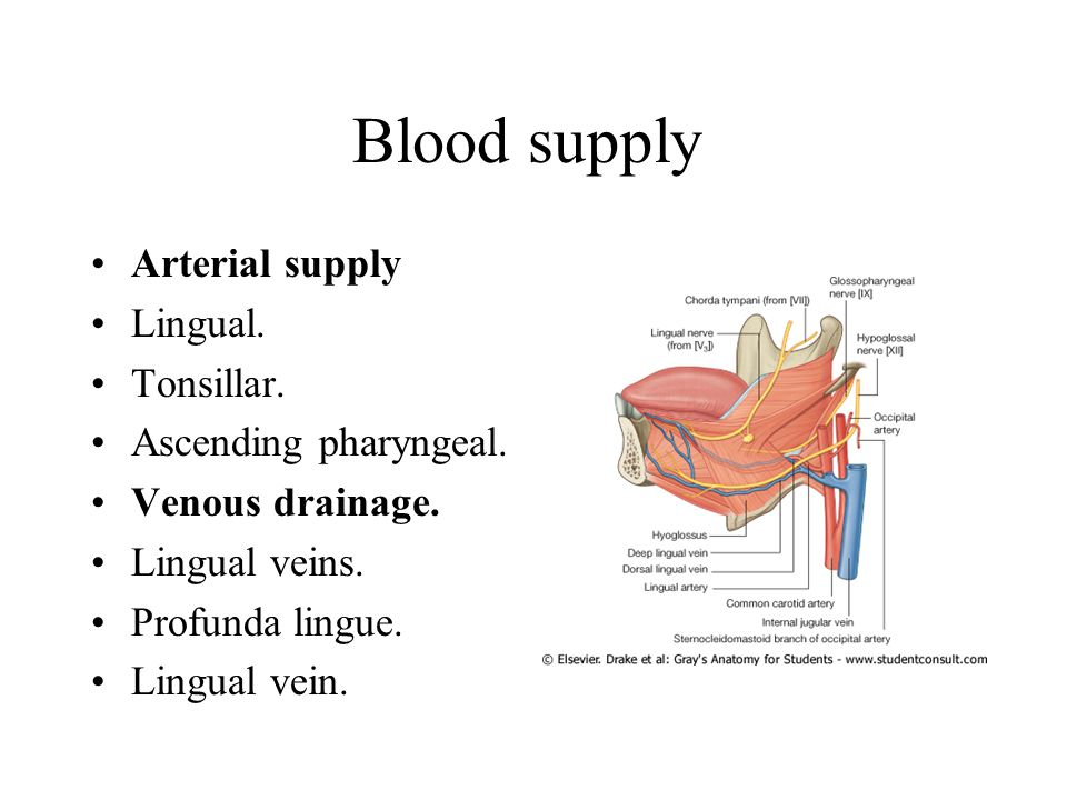 Blood supply Arterial supply Lingual. Tonsillar. Ascending pharyngeal.