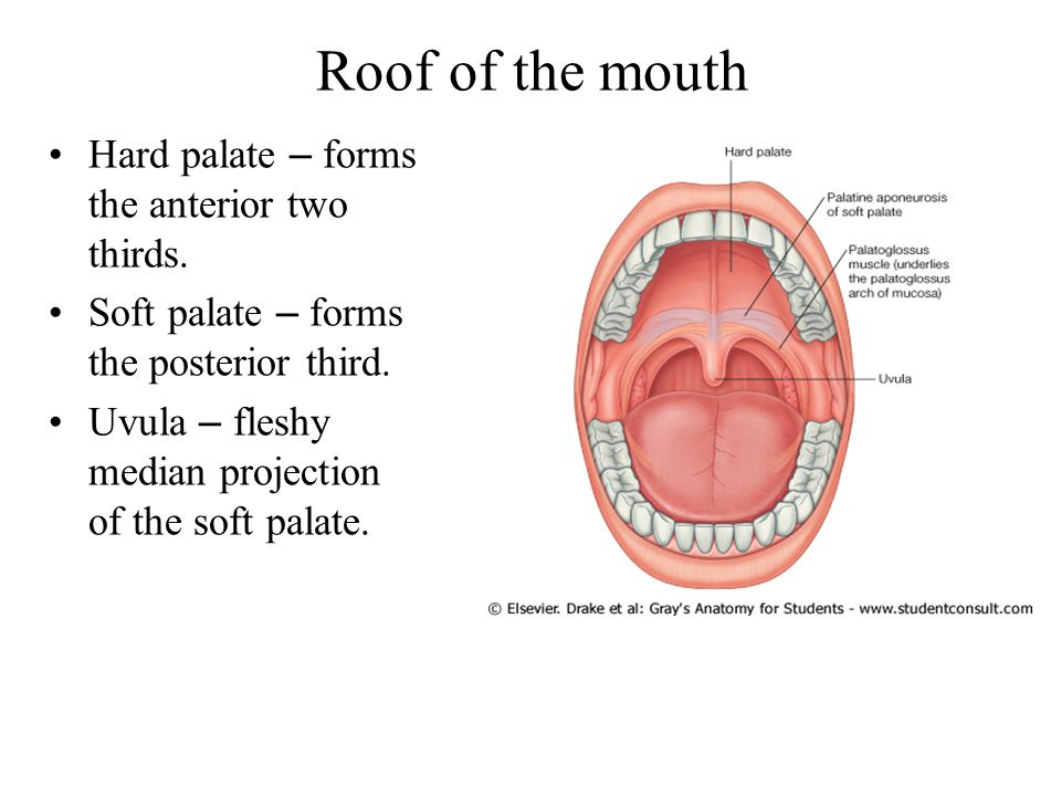 Roof of the mouth Hard palate – forms the anterior two thirds.