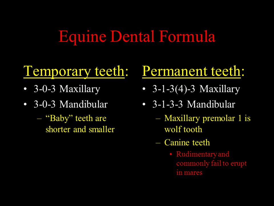 Equine Dental Formula Temporary teeth: Permanent teeth:
