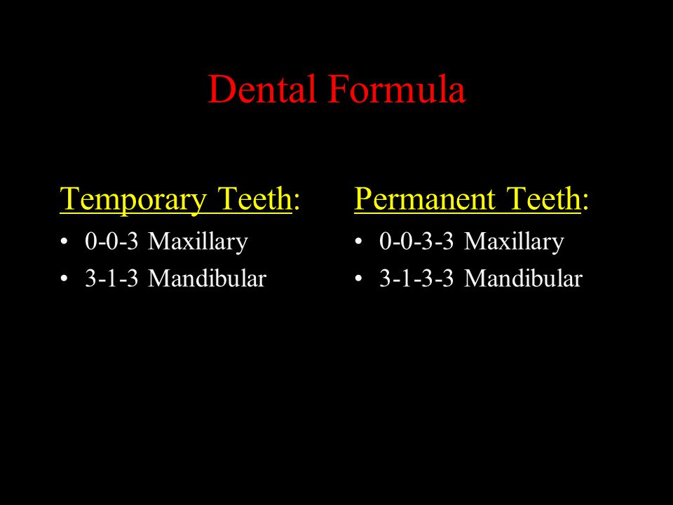 Dental Formula Temporary Teeth: Permanent Teeth: 0-0-3 Maxillary