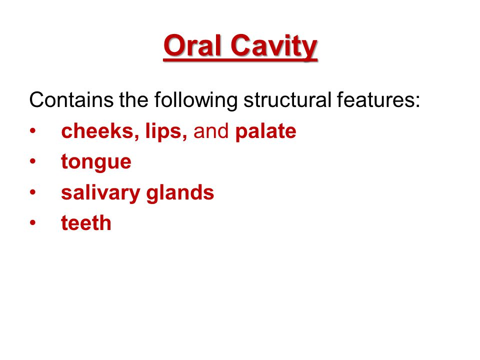 Oral Cavity Contains the following structural features: