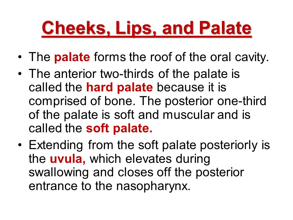 Cheeks, Lips, and Palate The palate forms the roof of the oral cavity.