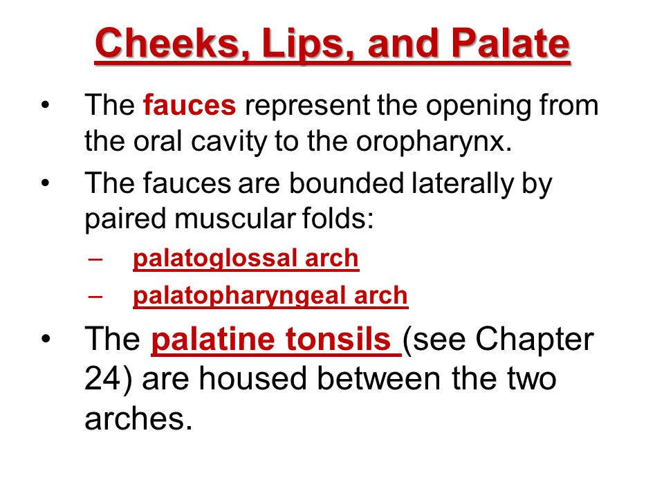 Cheeks, Lips, and Palate The fauces represent the opening from the oral cavity to the oropharynx.