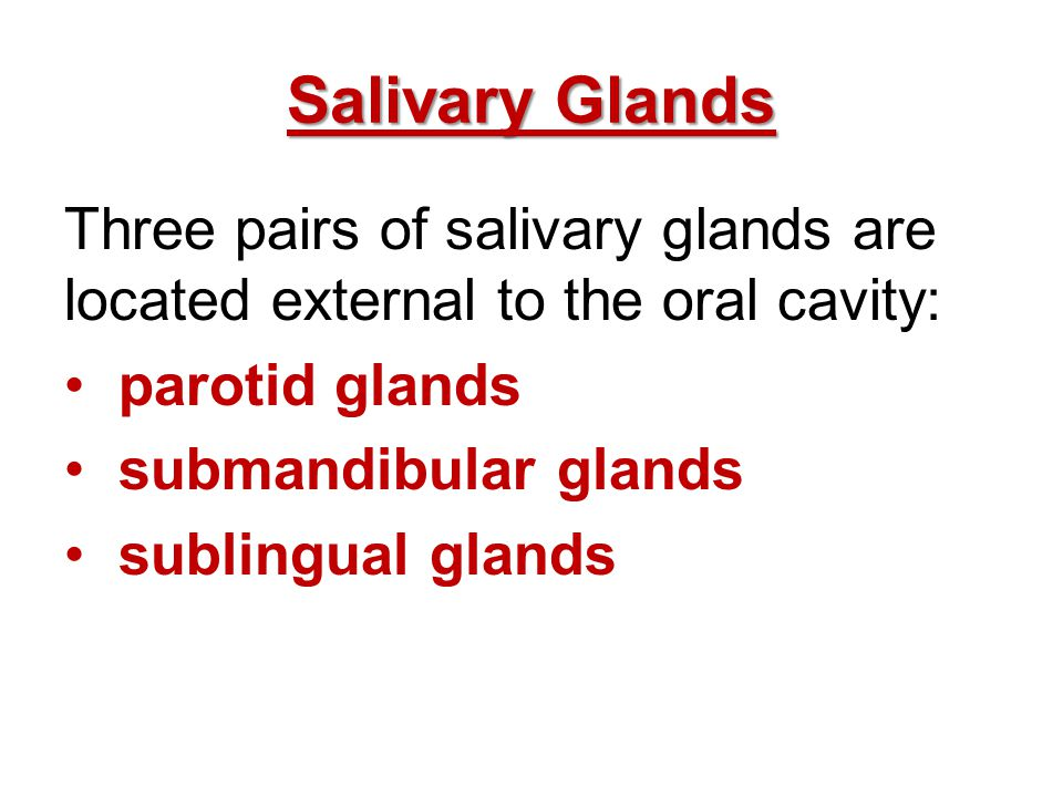 Salivary Glands Three pairs of salivary glands are located external to the oral cavity: parotid glands.
