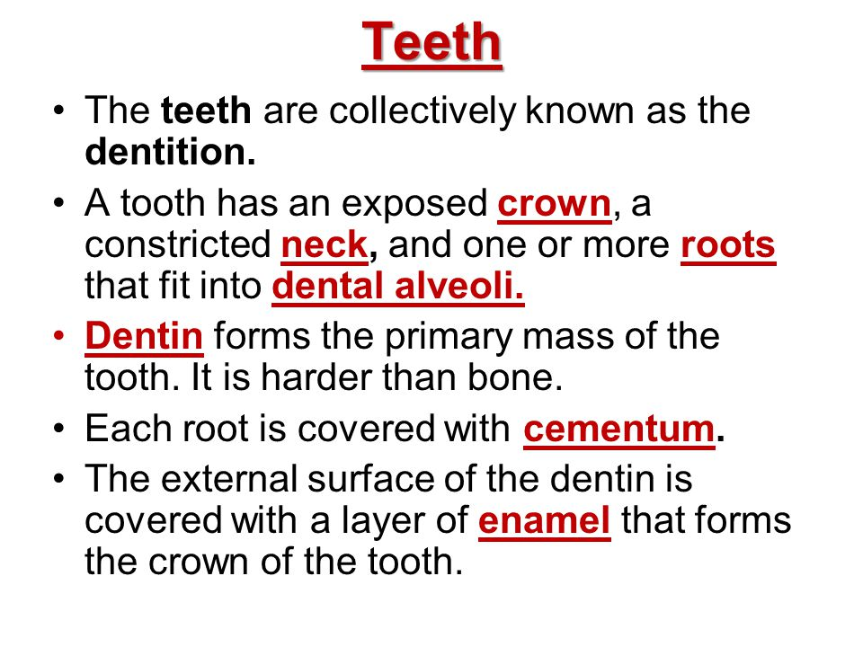 Teeth The teeth are collectively known as the dentition.