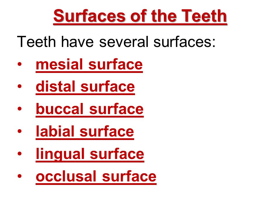 Surfaces of the Teeth Teeth have several surfaces: mesial surface