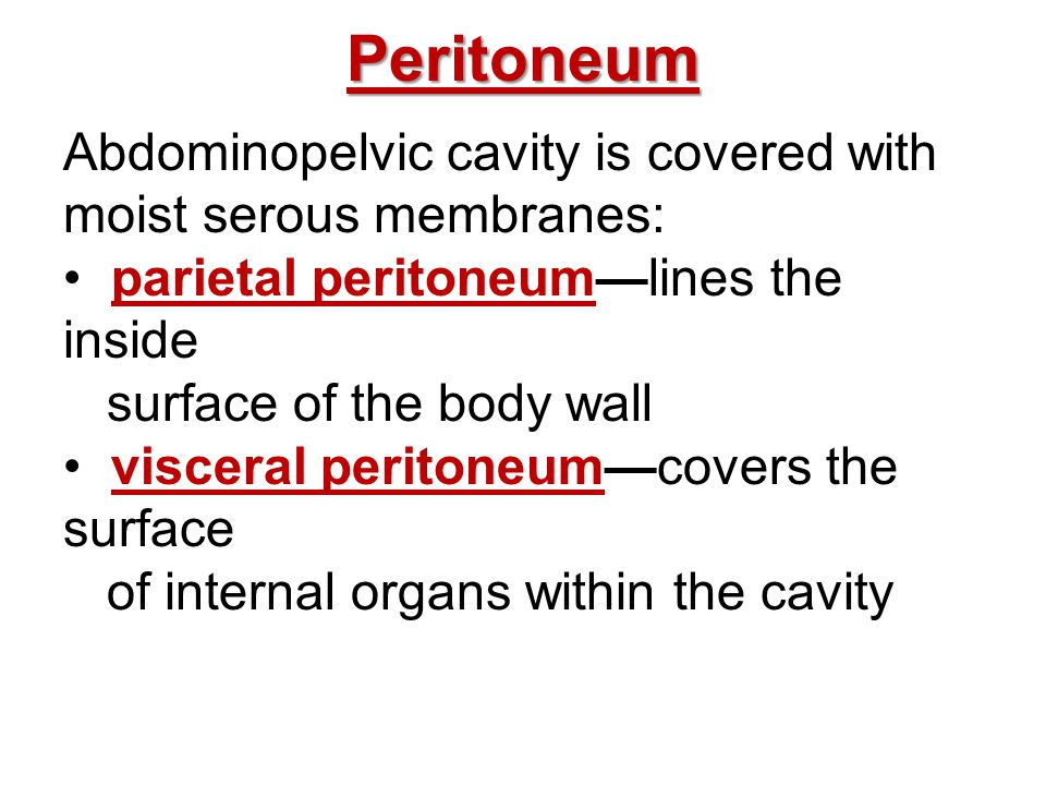 Peritoneum Abdominopelvic cavity is covered with moist serous membranes: parietal peritoneum—lines the inside.