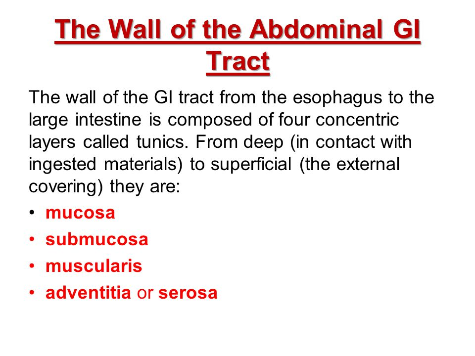 The Wall of the Abdominal GI Tract