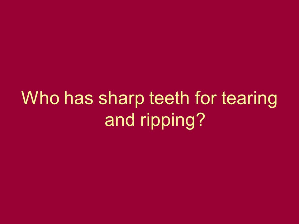 Who has sharp teeth for tearing and ripping