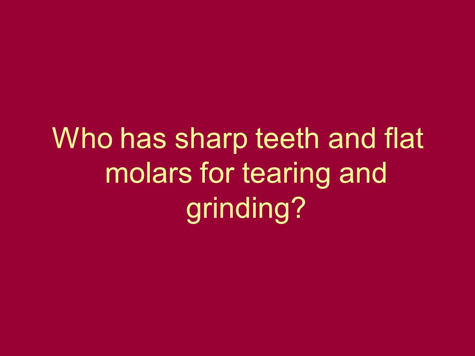 Who has sharp teeth and flat molars for tearing and grinding