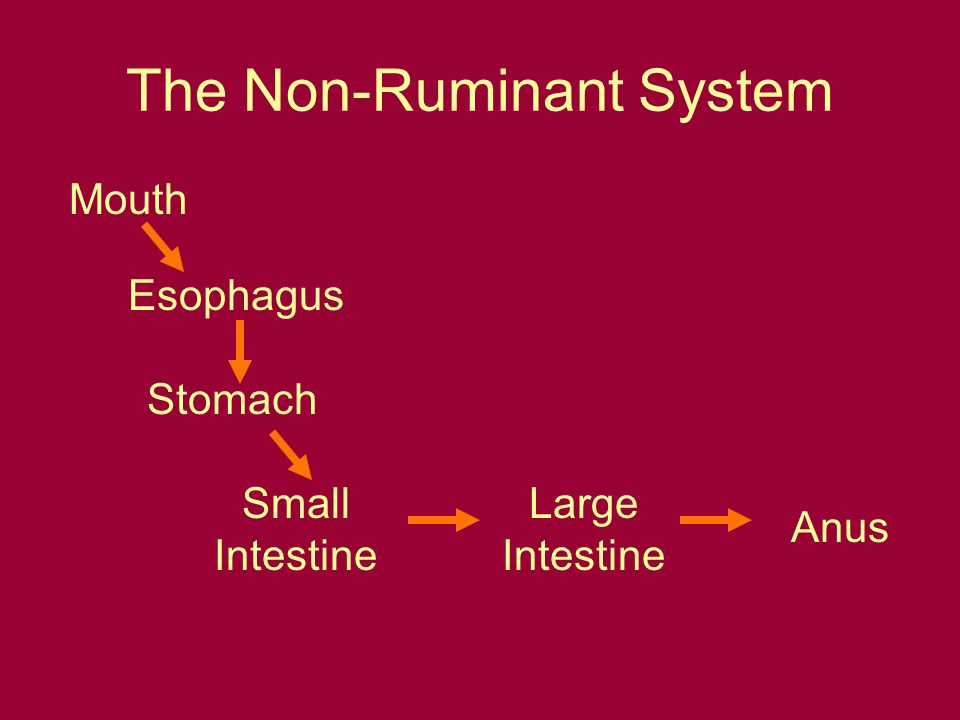 The Non-Ruminant System