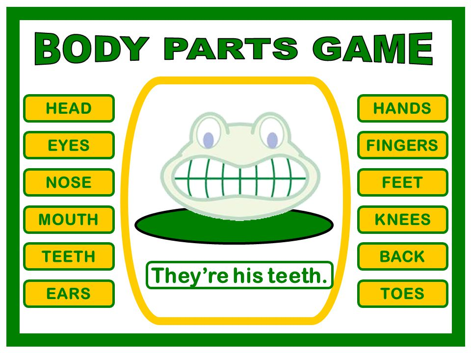 BODY PARTS GAME They're his teeth. HEAD HANDS EYES FINGERS NOSE FEET