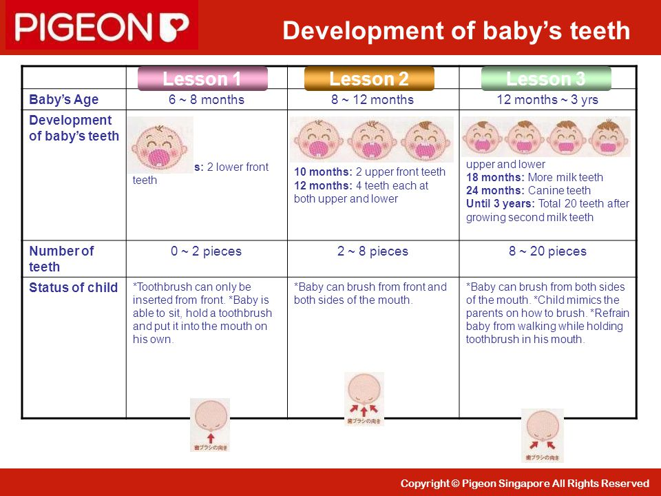 Development of baby's teeth