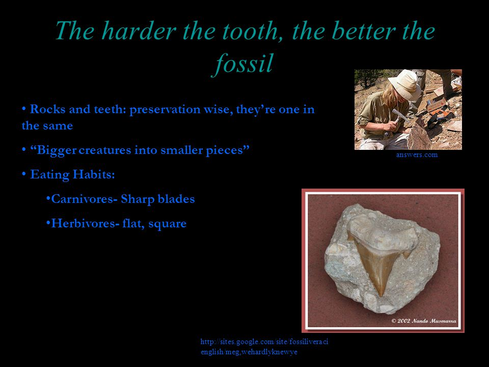 The harder the tooth, the better the fossil