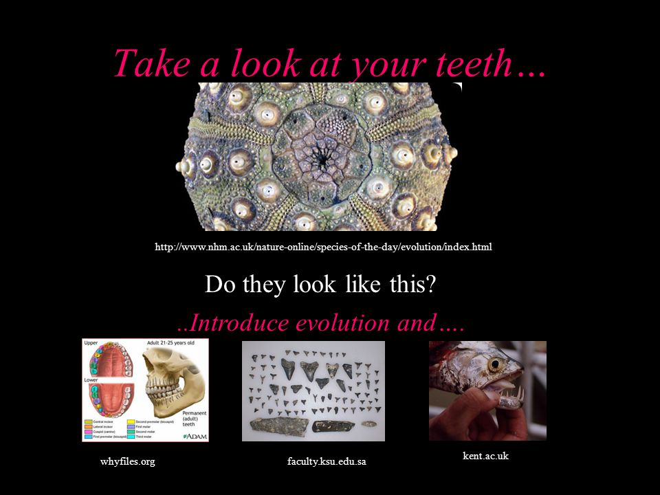 Take a look at your teeth…