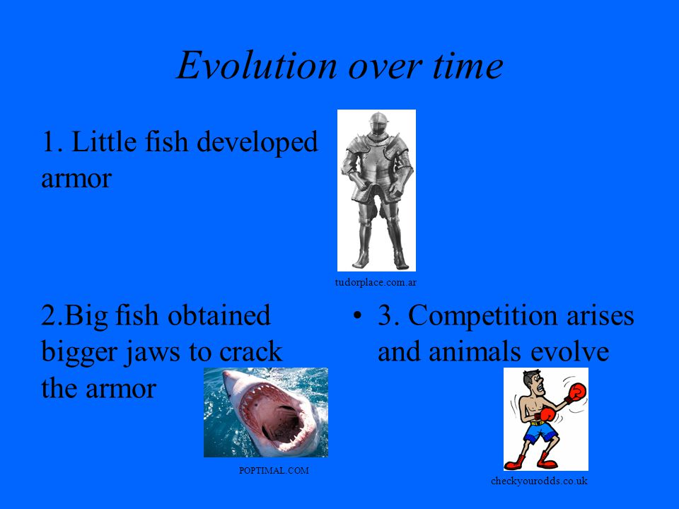 Evolution over time 1. Little fish developed armor