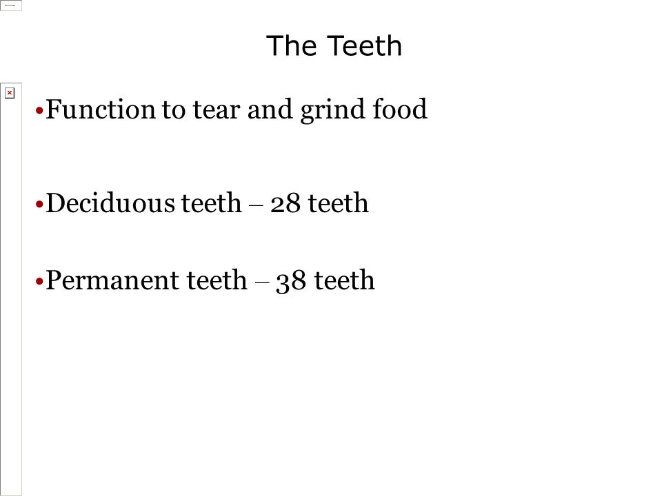 The Teeth Function to tear and grind food Deciduous teeth – 28 teeth Permanent teeth – 38 teeth