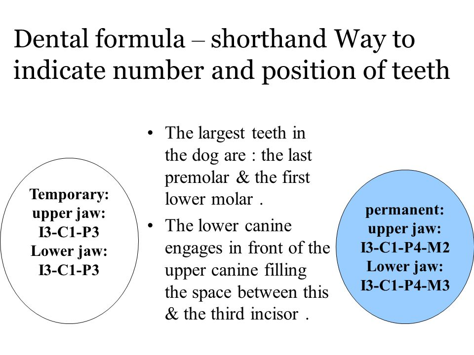 Dental formula – shorthand Way to indicate number and position of teeth
