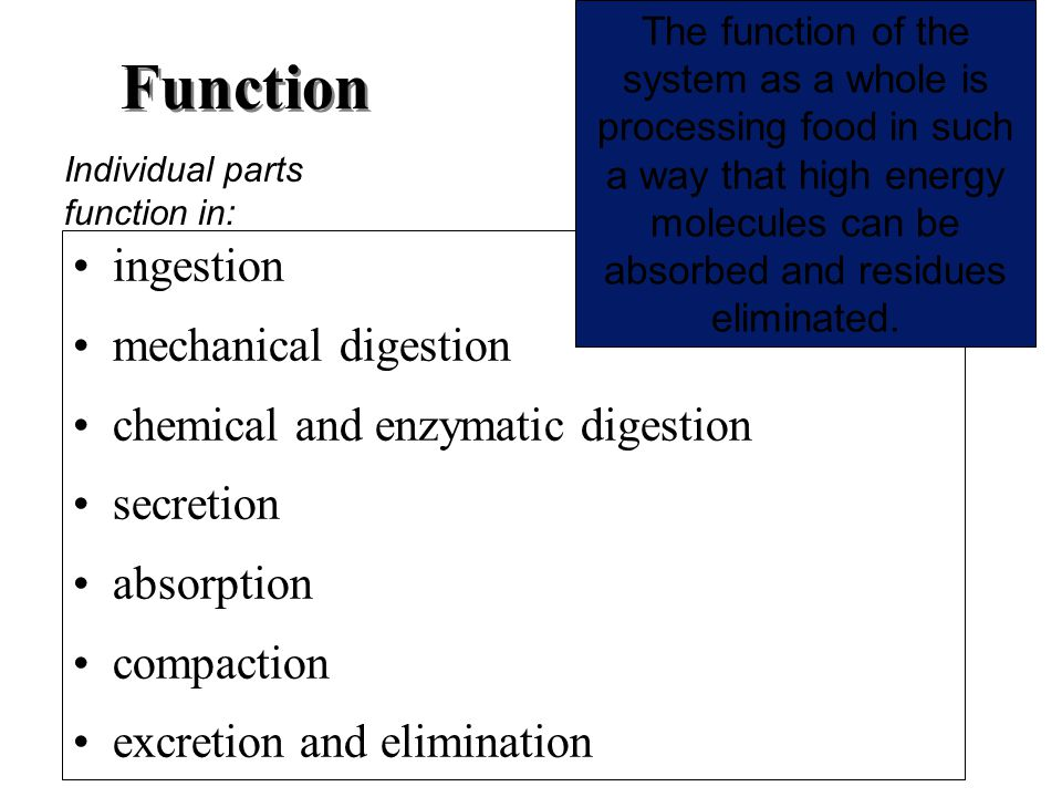 Function ingestion mechanical digestion