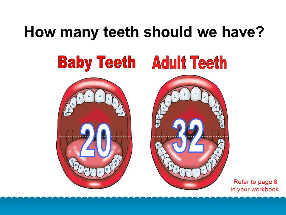 How many teeth should we have