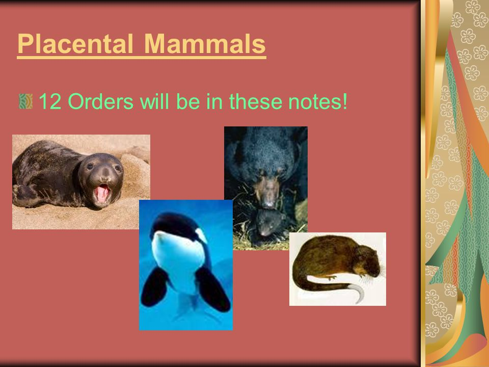 Placental Mammals 12 Orders will be in these notes!