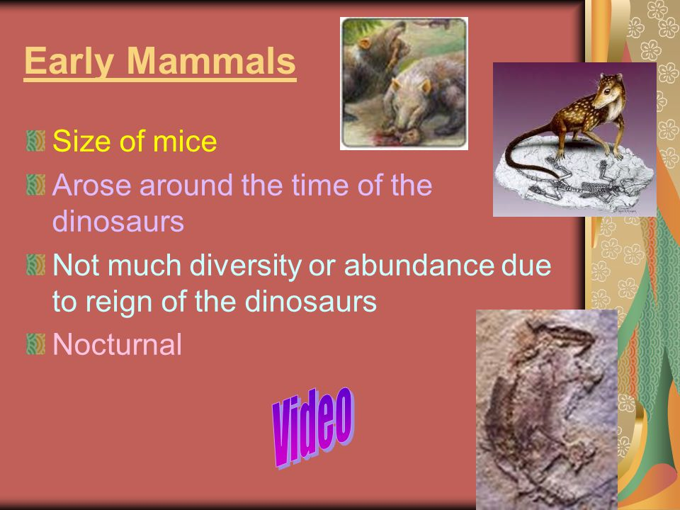 Early Mammals Video Size of mice