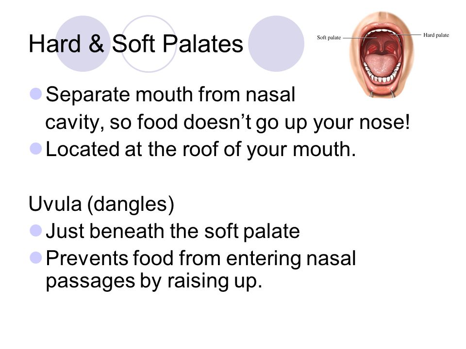 Hard & Soft Palates Separate mouth from nasal
