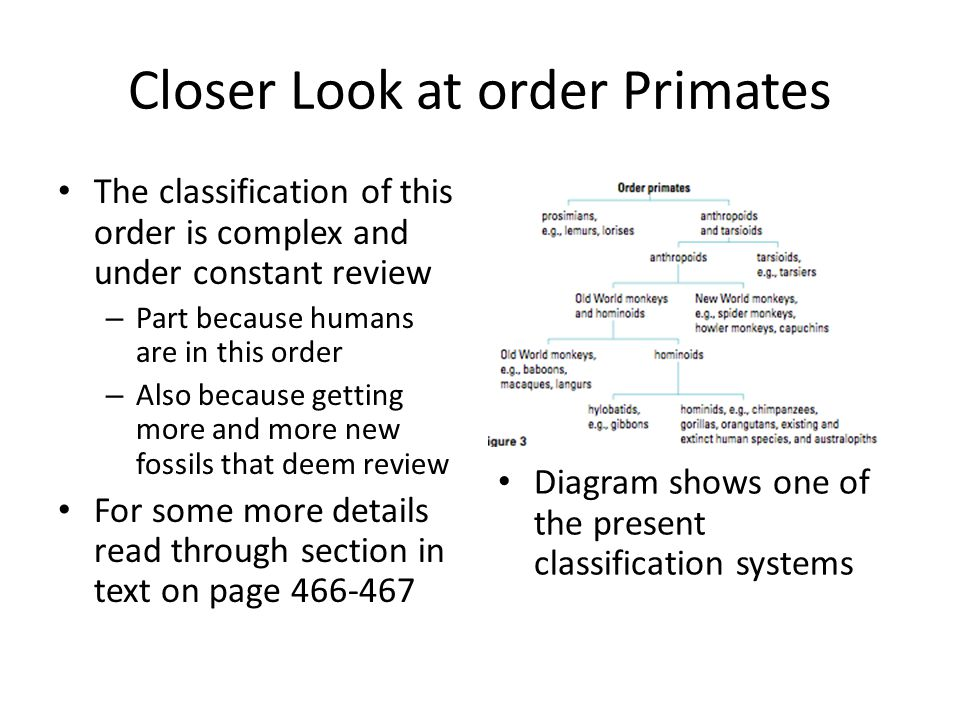 Closer Look at order Primates