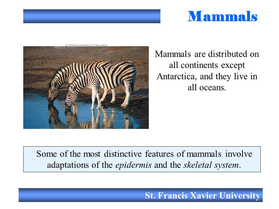 Mammals Mammals are distributed on all continents except Antarctica, and they live in all oceans.
