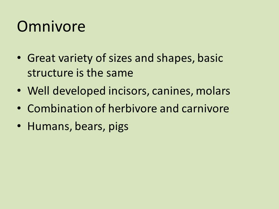 Omnivore Great variety of sizes and shapes, basic structure is the same. Well developed incisors, canines, molars.