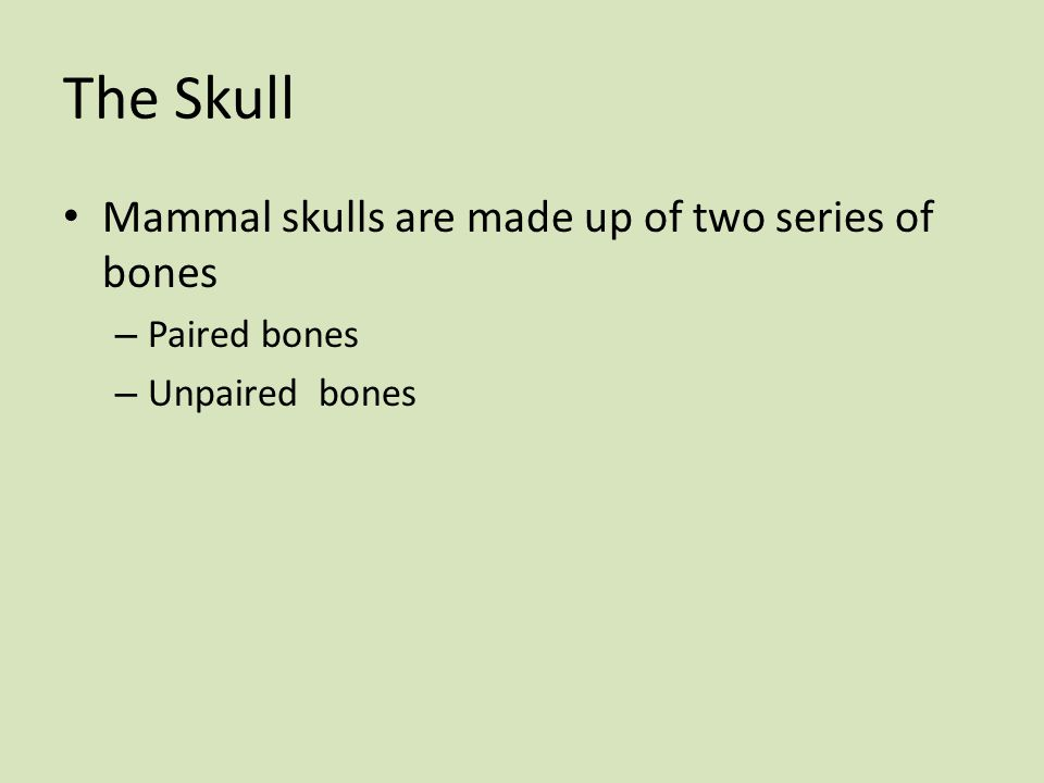 The Skull Mammal skulls are made up of two series of bones