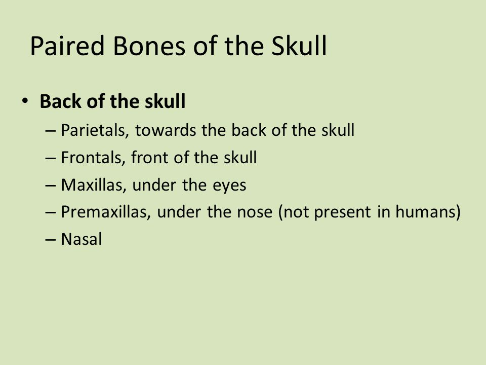Paired Bones of the Skull