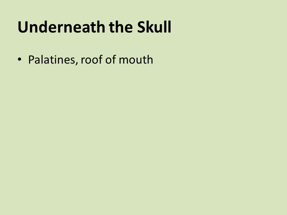 Underneath the Skull Palatines, roof of mouth