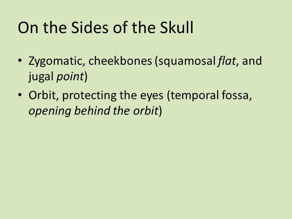 On the Sides of the Skull