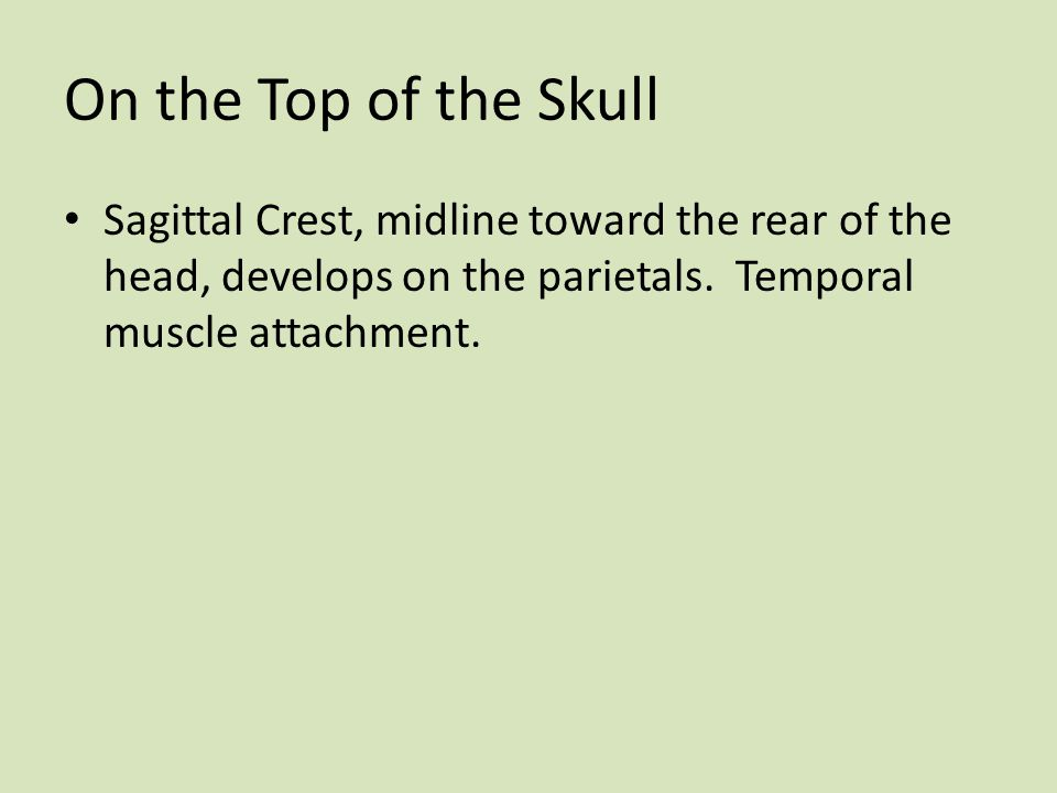On the Top of the Skull Sagittal Crest, midline toward the rear of the head, develops on the parietals.