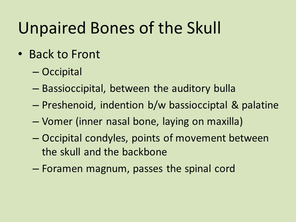 Unpaired Bones of the Skull
