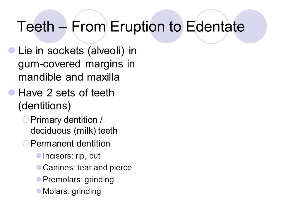 Teeth – From Eruption to Edentate