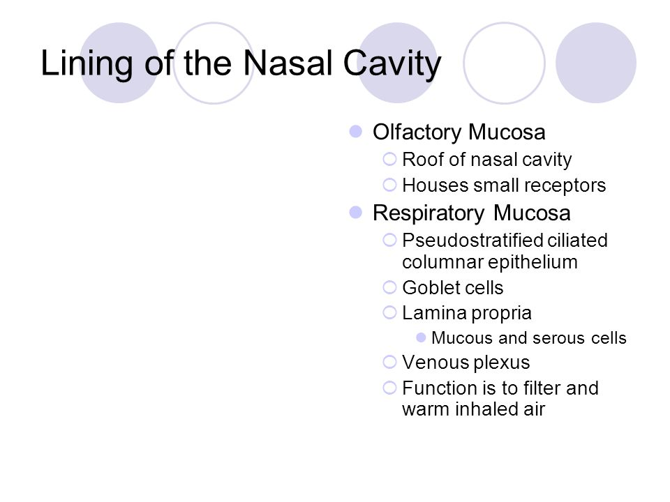 Lining of the Nasal Cavity